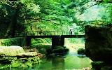 森林公园—金鞭溪